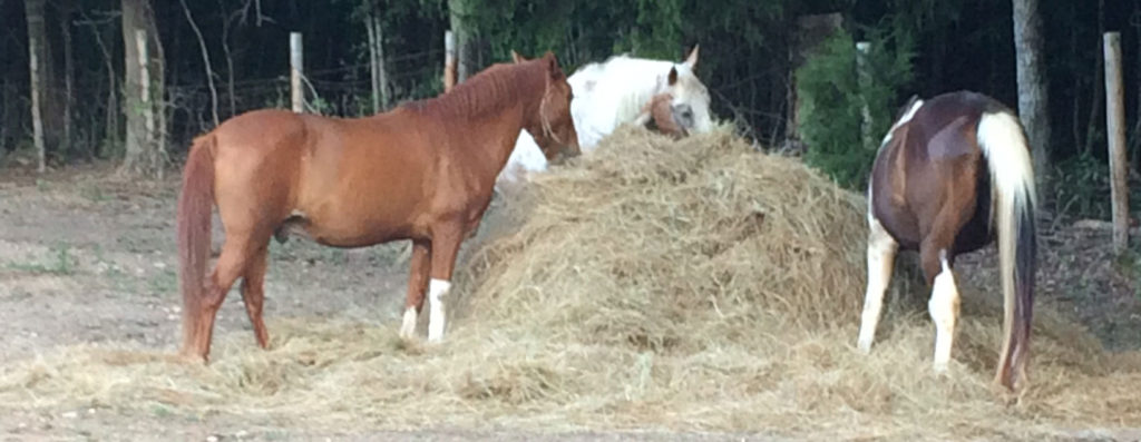 Three horses eating at a round bale of hay.